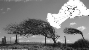 Windswept_tree